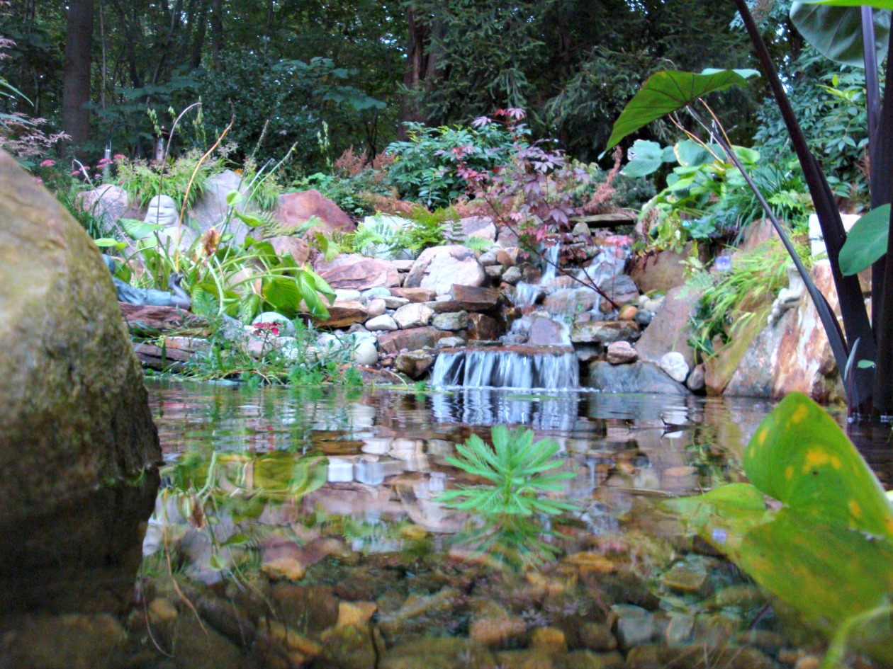 Most Inspiring Landscape Water - Ponds_10  Trends_793939.jpg
