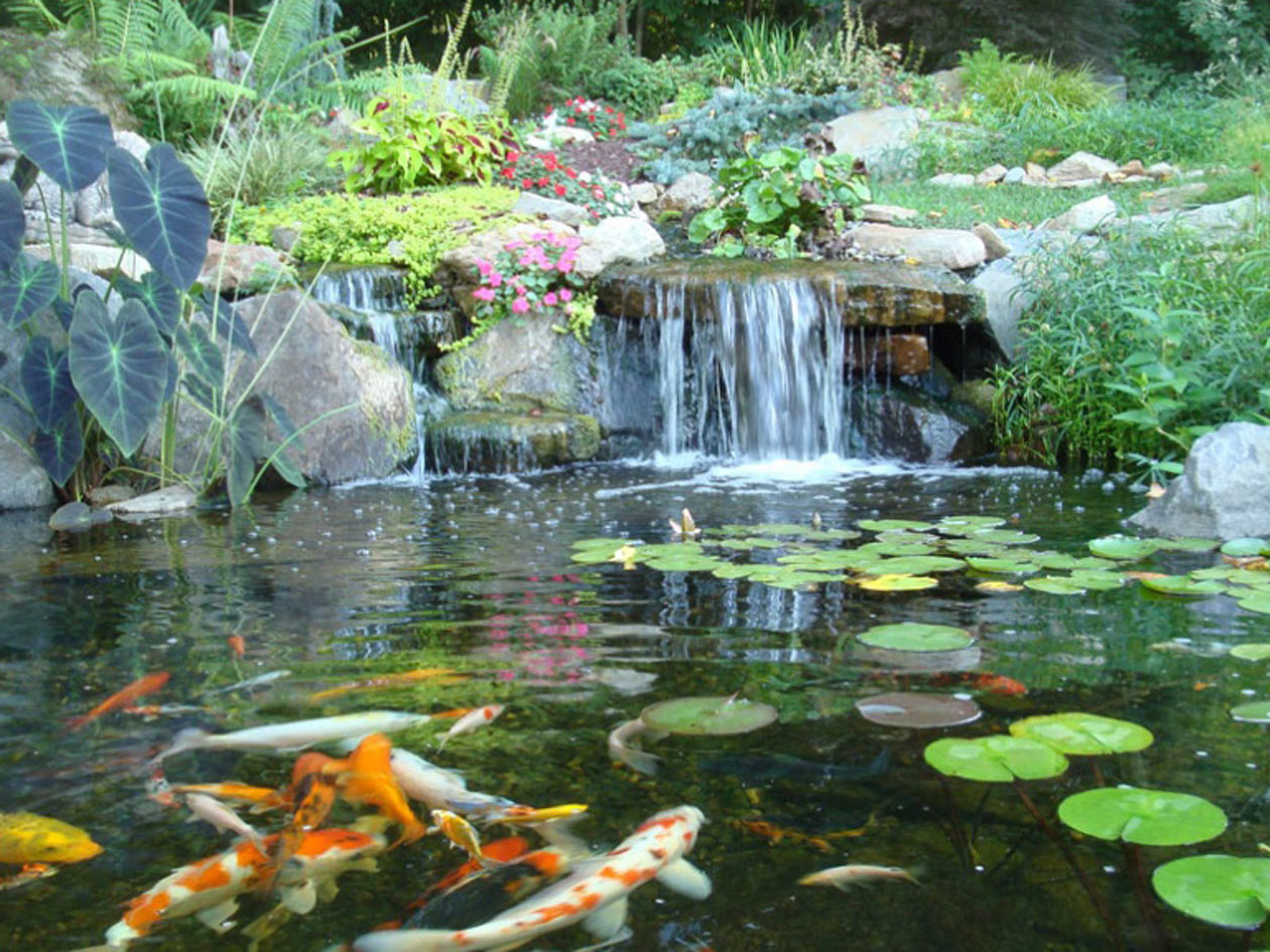 Ecosystem pond by Turpin Landcaping