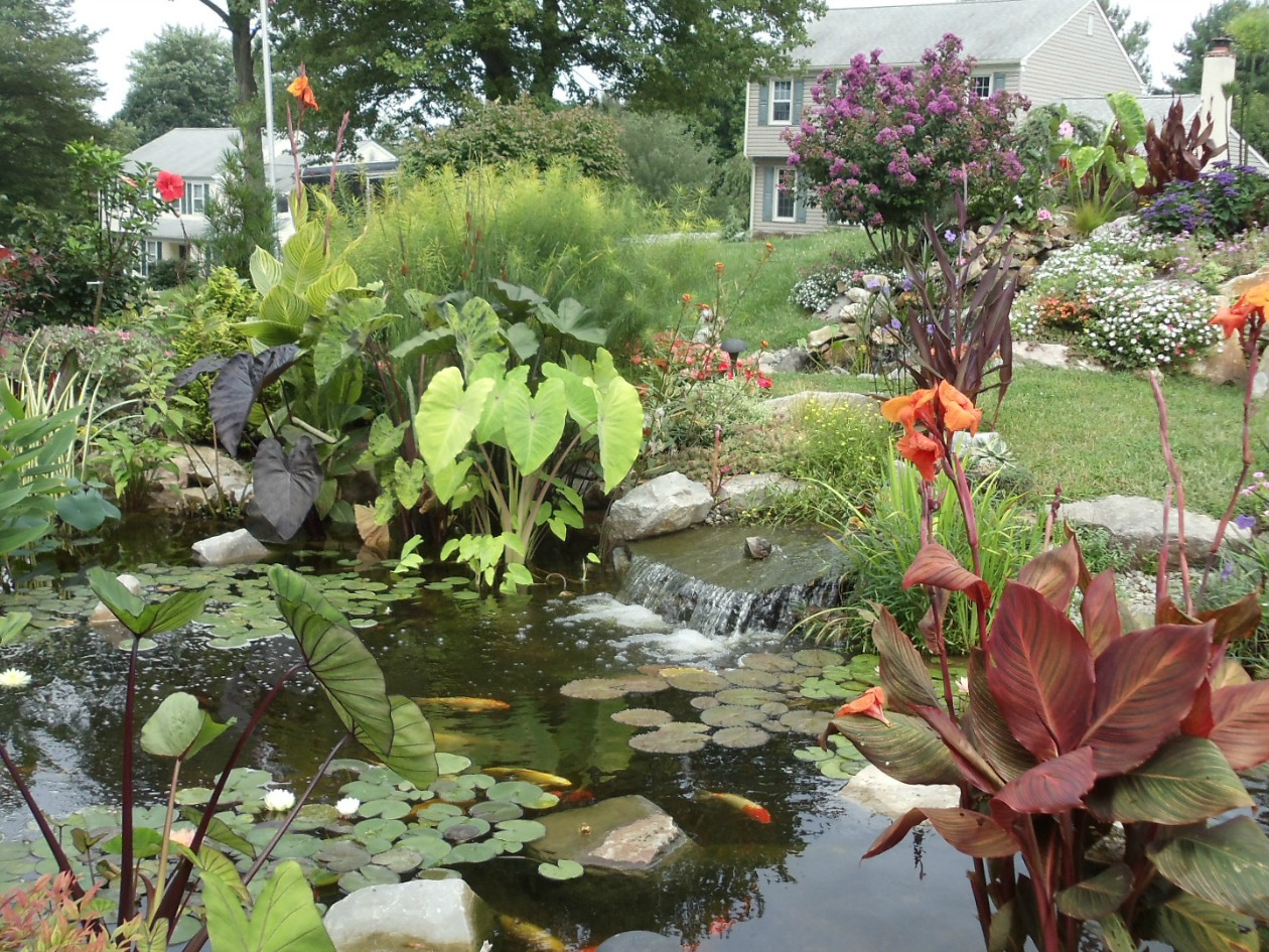 The difference is in the plants turpin landscape design for Pond with plants