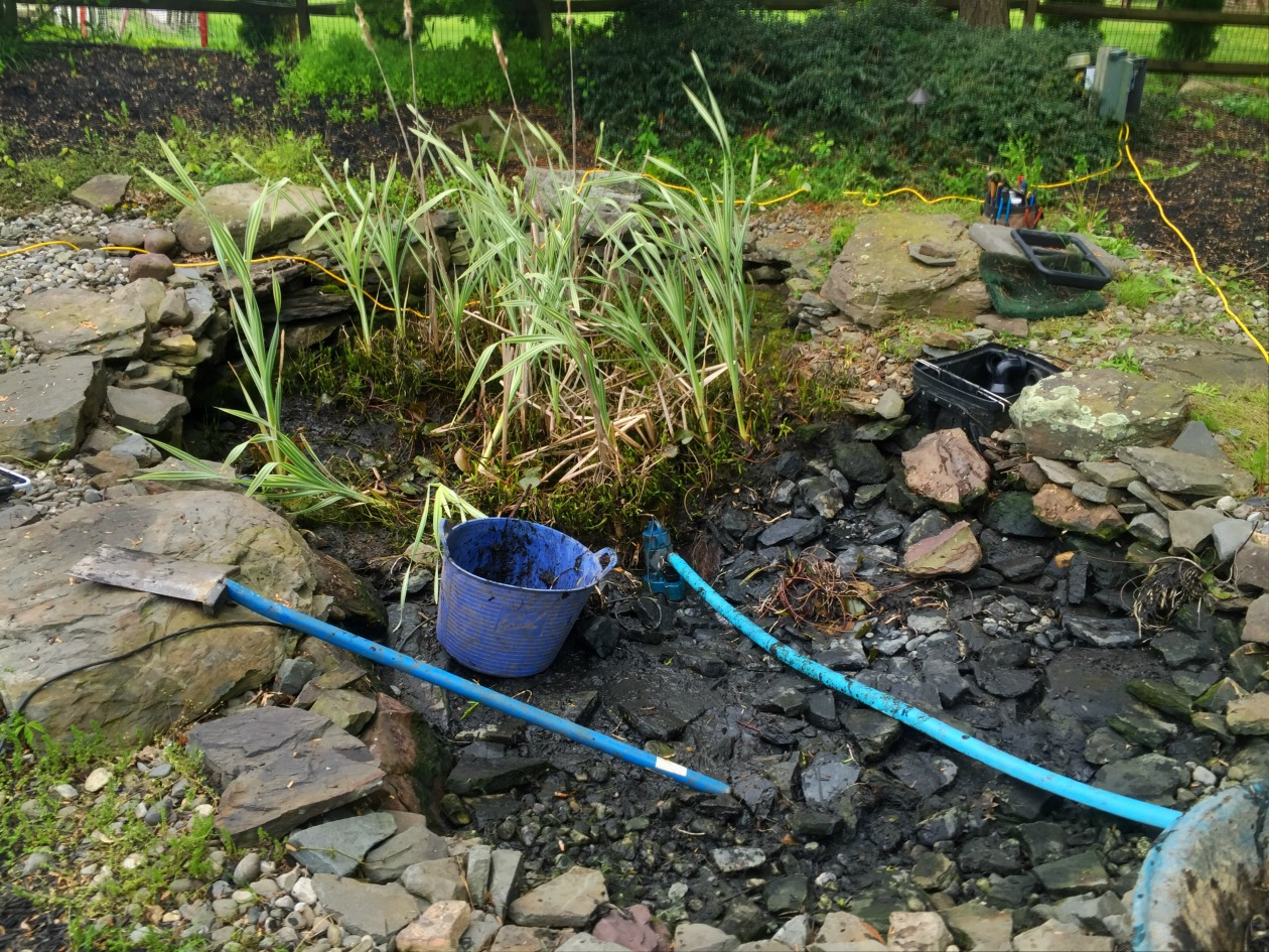 How much does it cost to clean out a koi pond turpin for Koi pond maintenance service