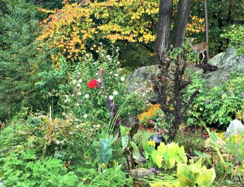 What Are Some Deer Resistant Plants In Chester County?