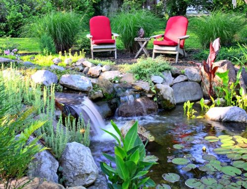 How much does a pond cost to have installed?
