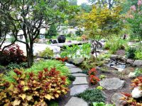Low Maintenance Landscape/Garden
