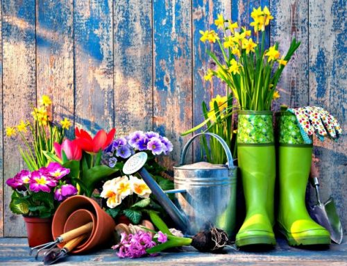 When is the best time to install plants in Chester County?