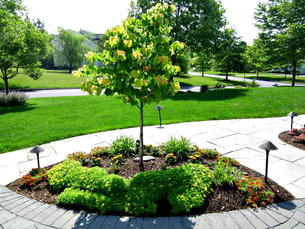 Selective Tree and Shrub Pruning