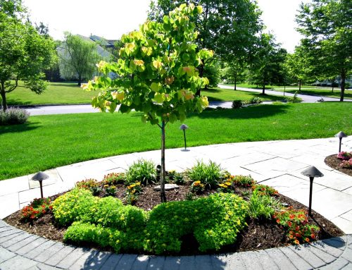 What is Selective Tree and Shrub Pruning-Landscape Experts Answer Your Questions!