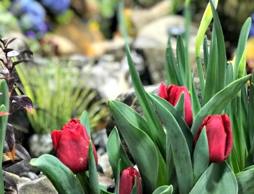 Greater Philadelphia Home & Garden Show 2019